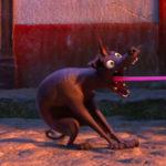 «Тайна Коко», «Босс-молокосос» и ещё 24 мультфильма претендуют на «Оскар»